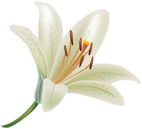 wallpaper bunga lily hd earth lily wallpapers desktop phone tablet awesome
