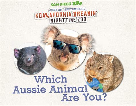 images  koalafornia  pinterest koala bears koalas  animals  pets