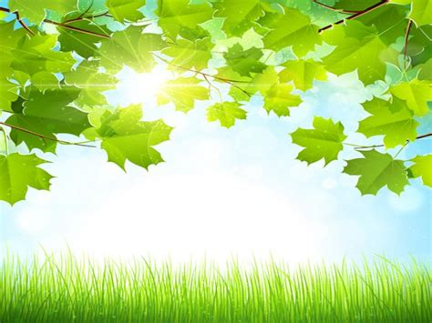 nature frame backgrounds  powerpoint templates