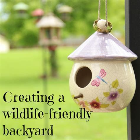Can You Find Gold In Your Backyard by How To Create A Wildlife Friendly Backyard Inner Child