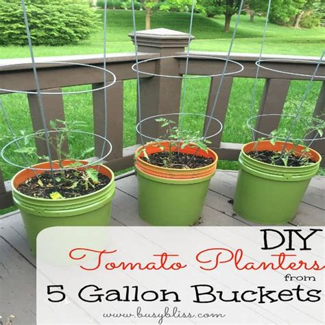 diy tomato planters from 5 gallon buckets gardens