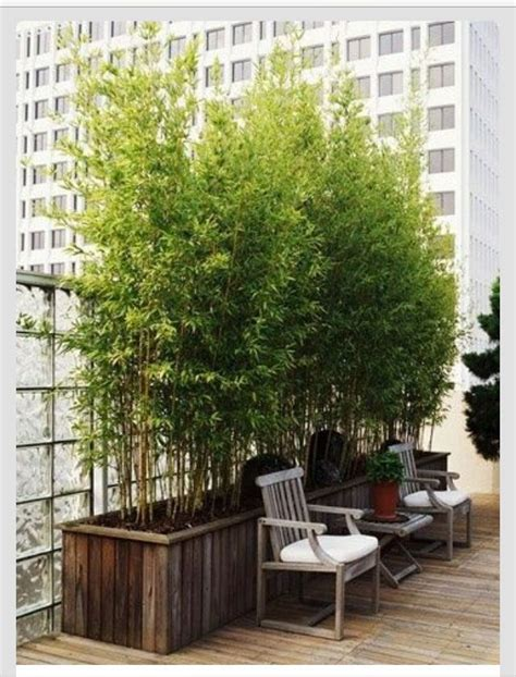 potted bamboo plants for privacy on the deck i wanna