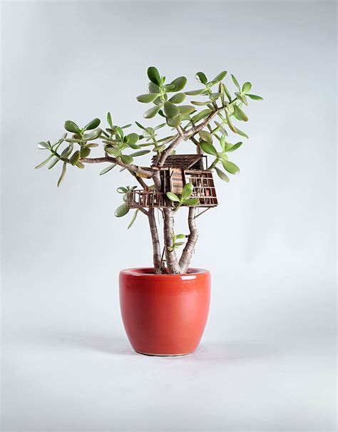 Miniature Indoor Plants | miniature tree houses for houseplants are just perfect for