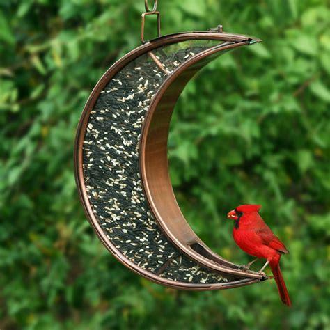 pin  jennifer olvera  backyard garden   bird