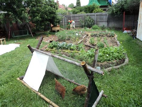 backyard permaculture backyard story permaculture