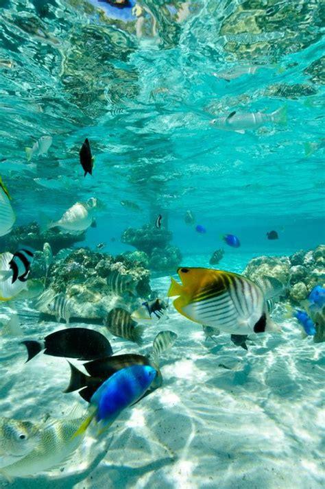 best in honolulu best spots for snorkeling in honolulu activities