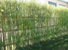 patio design bamboo fence