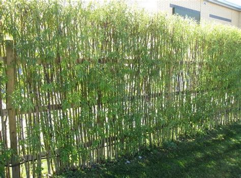 bamboo backyard homeofficedecoration garden bamboo fencing ideas