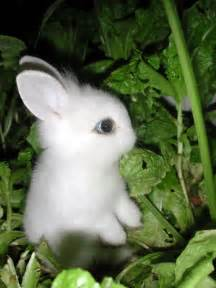 Cute bunnies on these posts 20 cute bunny pictures part 2 cute bunny