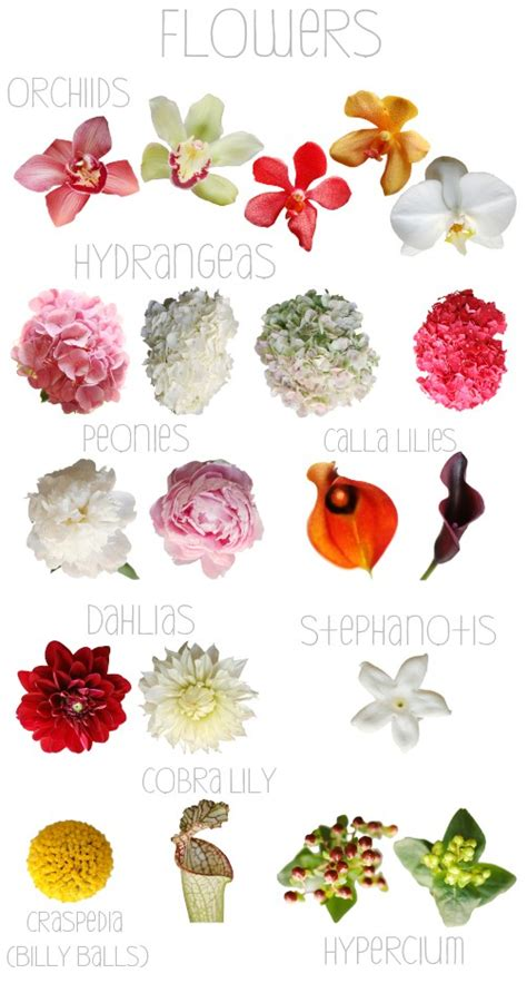 names of flowers types of flowers with pictures and flowers creative entertaining