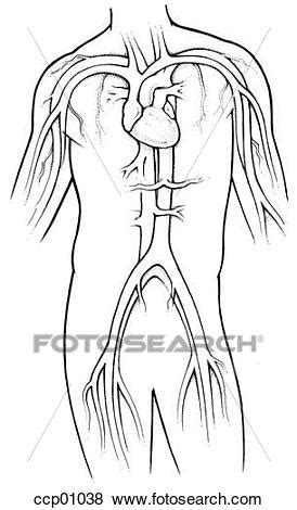 circulatory system stock illustration ccp fotosearch