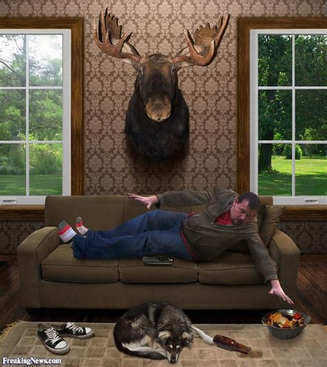 funny couch potato pictures funny moose pictures freaking news
