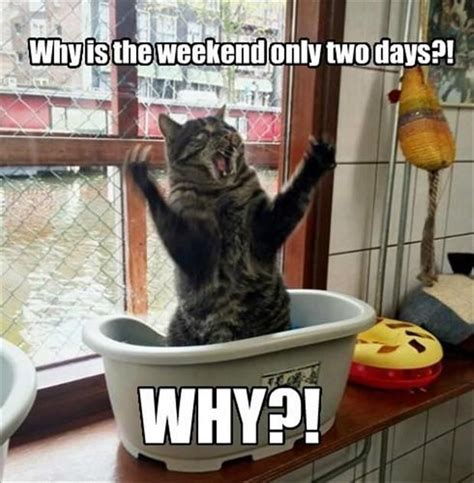 Funny Weekend Memes - 25 best funny weekend quotes on pinterest friday funny
