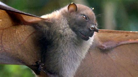animals discovery animals new species discovered in papua new guinea