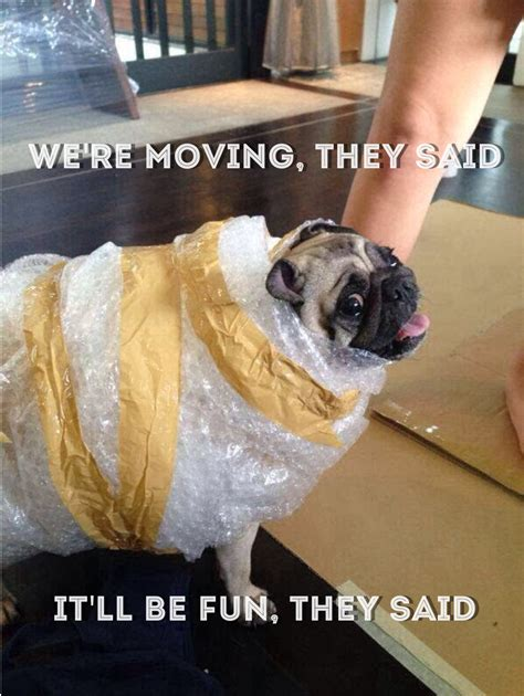 Moving Day Meme - those quot they said it ll be fun quot memes d random