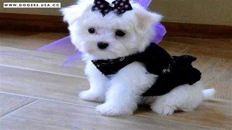 cutest puppy dogs   cute dog  collection