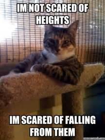 Scared Cat Meme - trending scared cat meme
