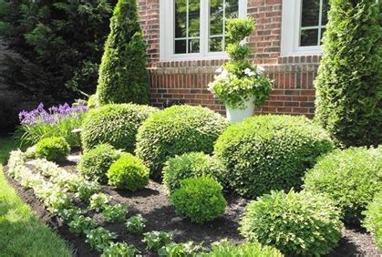 shrubs and bushes for landscaping pictures ideas
