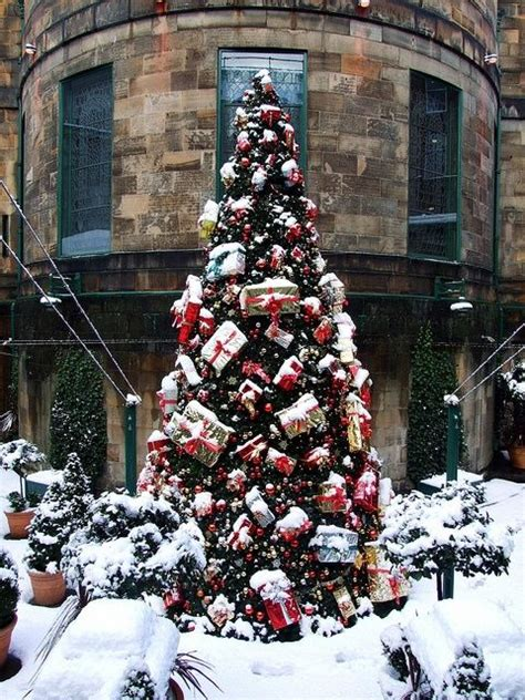 outdoor christmas tree in the snow pictures photos and