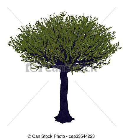 render forest clip of forest sandpaper fig or tree ficus exasperata