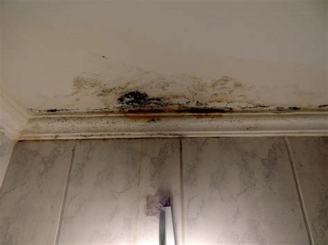 mold on ceiling in bathroom picture of hotel pataros