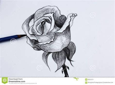Je Dessin Au Crayon Des Fleurs Photo Stock Image 65551211