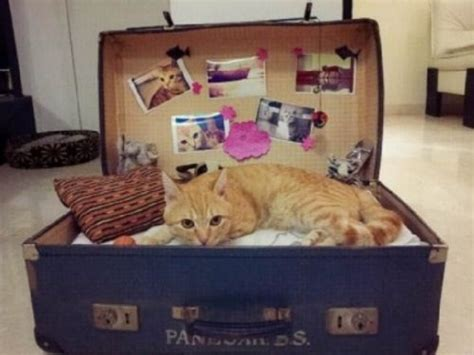 diy cat beds diy cat bed old suitcase for my future cats and