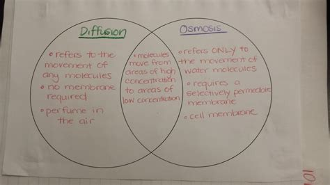 diffusion and osmosis venn diagram osmosis diffusion venn diagram 28 images osmosis a