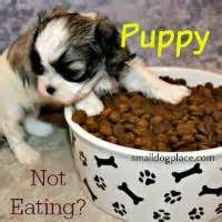 dog not eating feeding dogs guide to small breed dog diet