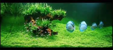 aquascape takashi amano takashi amano zen and the of the aquascape the