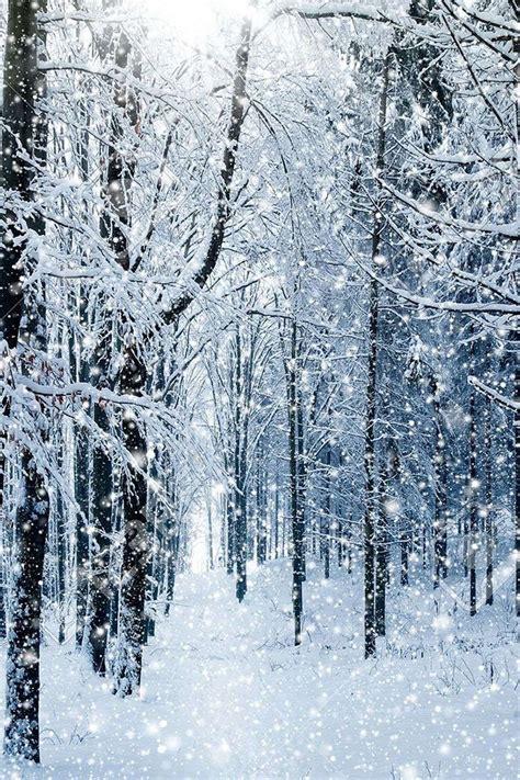 winter forest wallpaper winter wallpaper