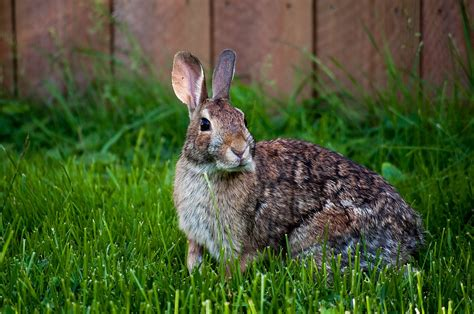 rabbit images rabbit