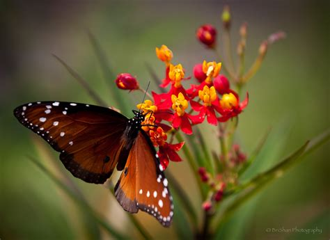 Flower Garden With Butterflies Butterfly On A Flower Brishan Photography Images Of Flowers Litle Pups