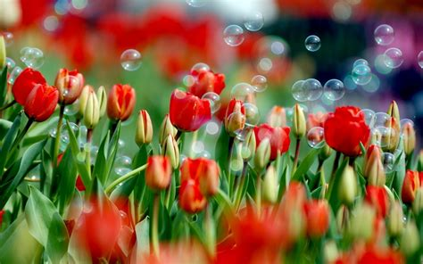 flowers that bloom at beautiful flowers wallpapers beautiful flower pictures 26803 1920x1200 px
