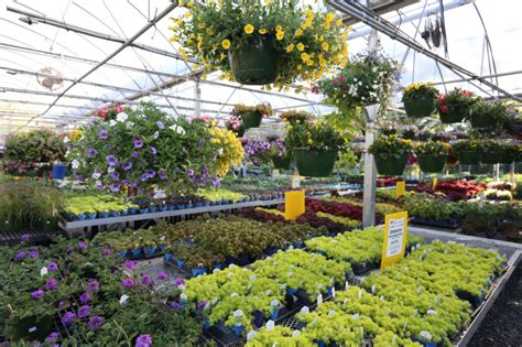 Garden Center Greenville Sc Home Country Boy S Home Garden Center
