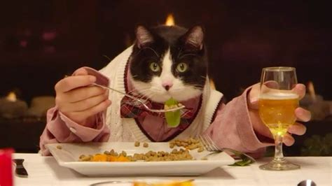 cat dinner cat invites his 13 friends to a stylish dinner