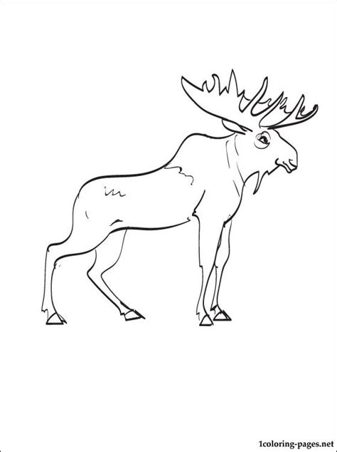 moose coloring page coloring pages