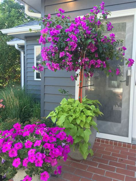 34 best images about patio flowers on pinterest