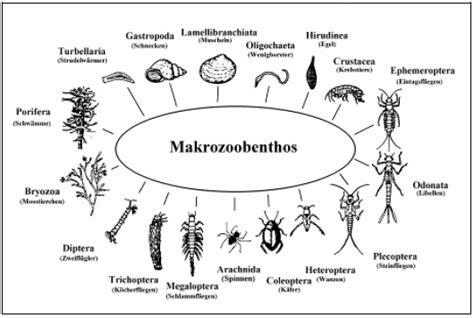 makrozoobenthos sebagai indikator pencemaran lingkungan
