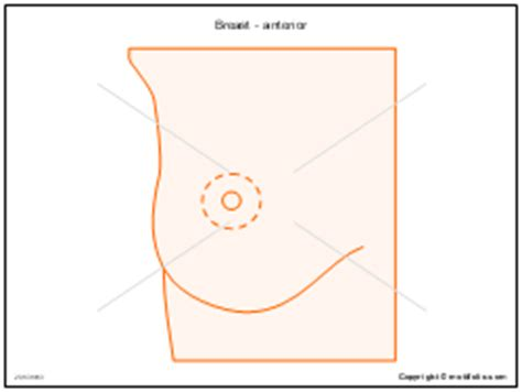 breast diagram drawing thorax chest lung drawing diagrams images in powerpoint