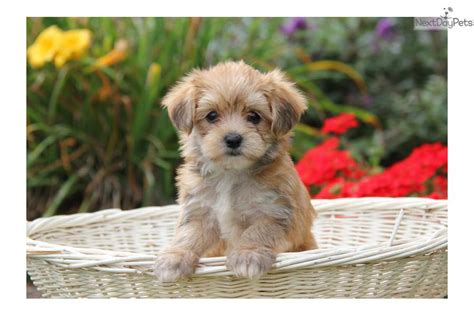 pet stores in pa that sell puppies store that sells puppies near me pets world