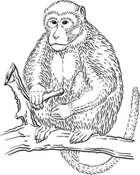 monkey coloring pages for adults jungle coloring pages coloring coloring pages and monkey