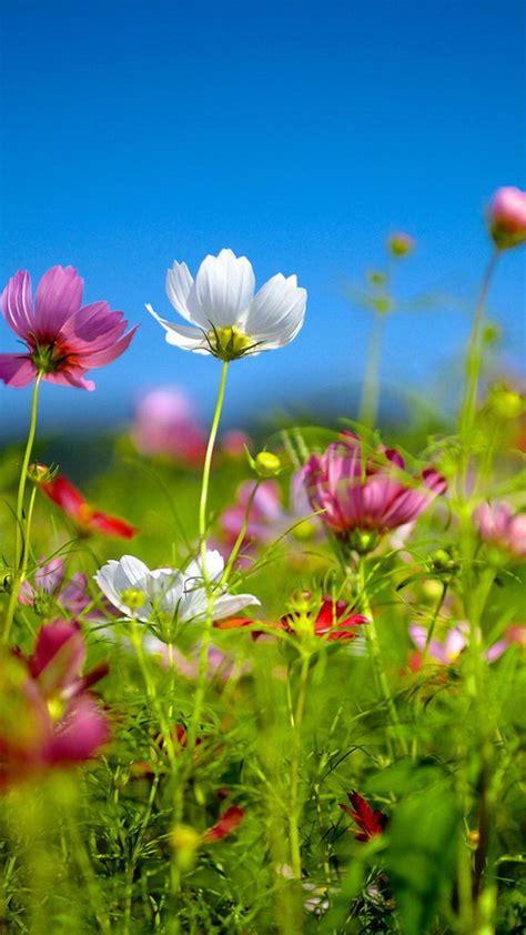wallpaper flowers  mobile impremedianet