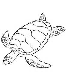 color of turtles printable sea turtle coloring page coloring me