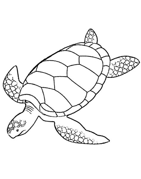 Coloring Page Sea Turtle by Free Turtle Drawing Coloring Pages