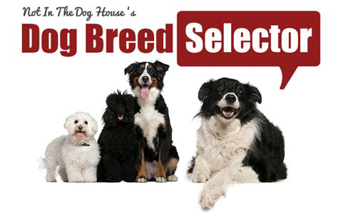 the perfect house dog dog breed selector find the perfect breed for you my dog dog breeds picture