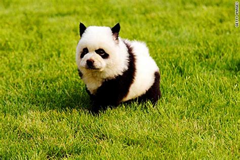 panda puppy panda costume