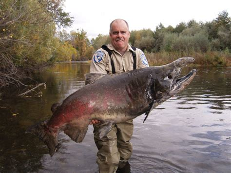 hd animals big fish picture