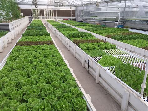 modern greenhouse aquaponics growing system buy