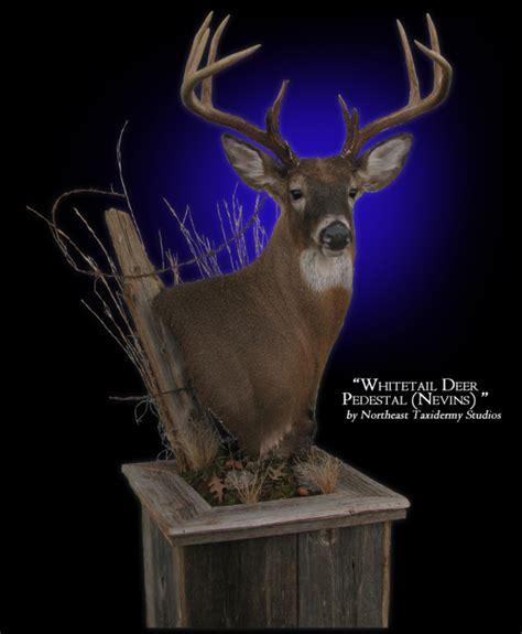pedestal wall mount whitetail deer pedestal mount mounted whitetail deer